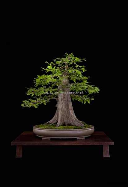 04.Leister.baldcypress