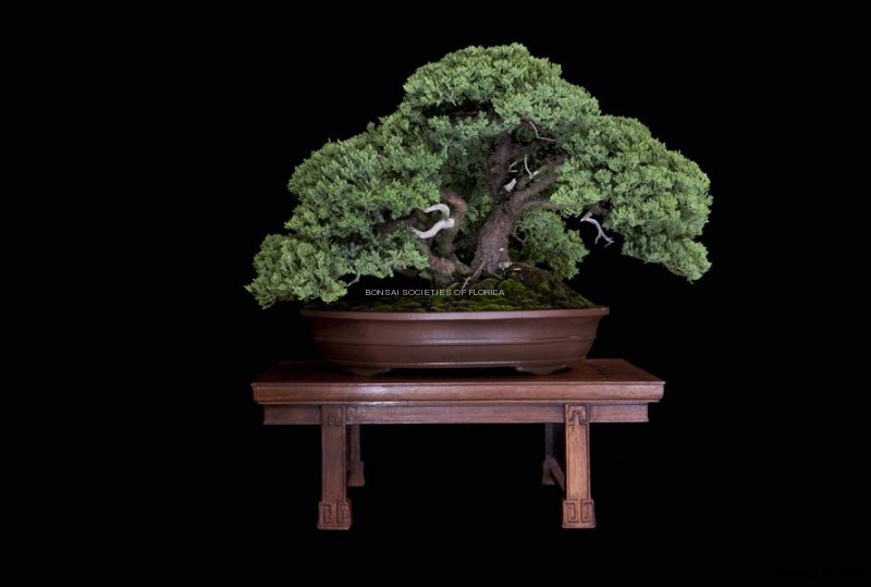 12.emenegger.juniperprocumbens
