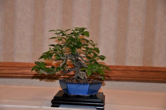 ll_convention_2010-02_n_7