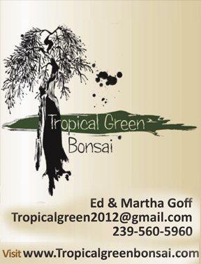 Tropical Green Bonsai