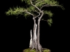 02.knlowton.pondcypress