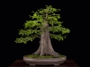 04.Leister.baldcypress