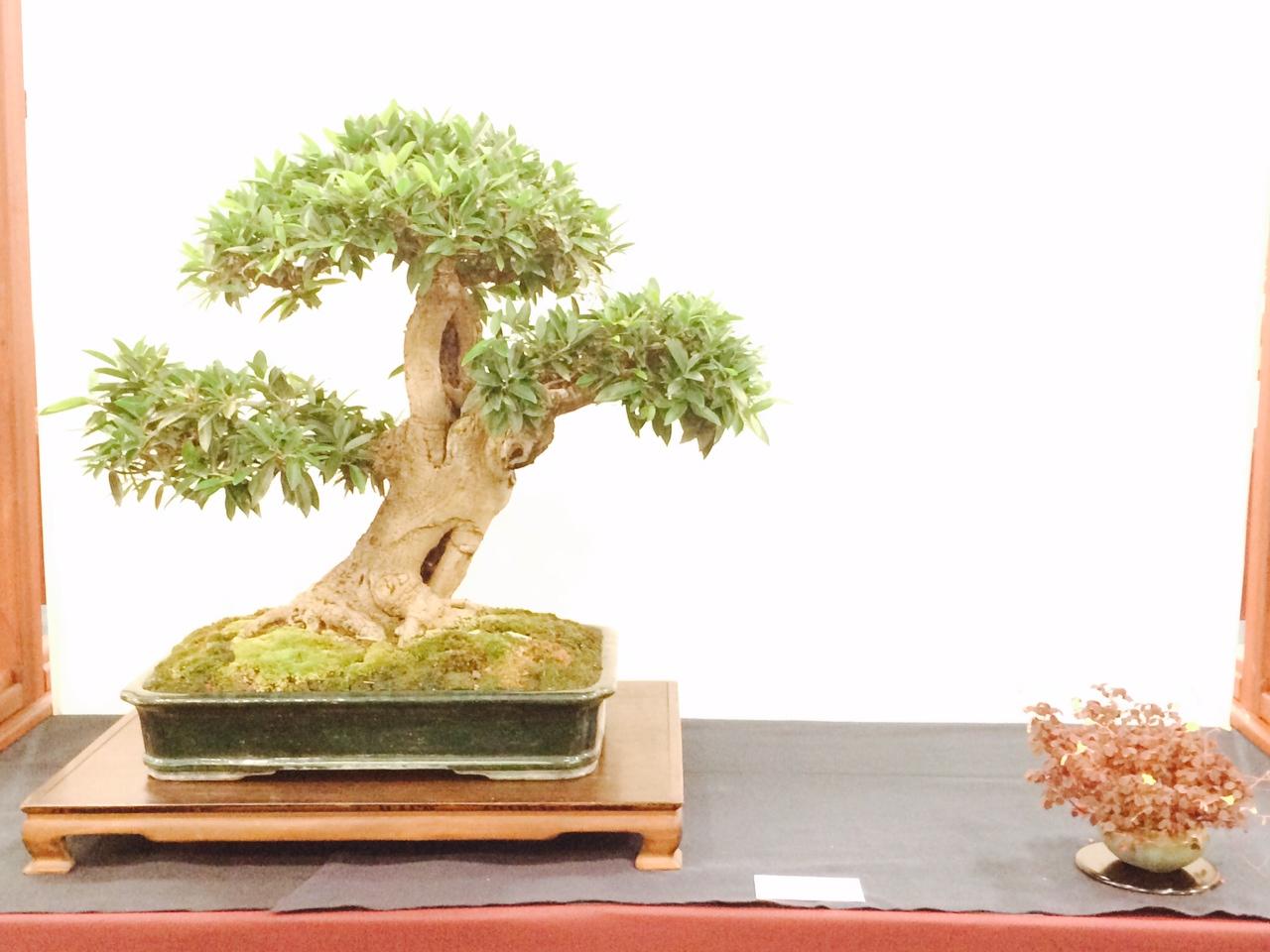 Dustin Mann Ficus
