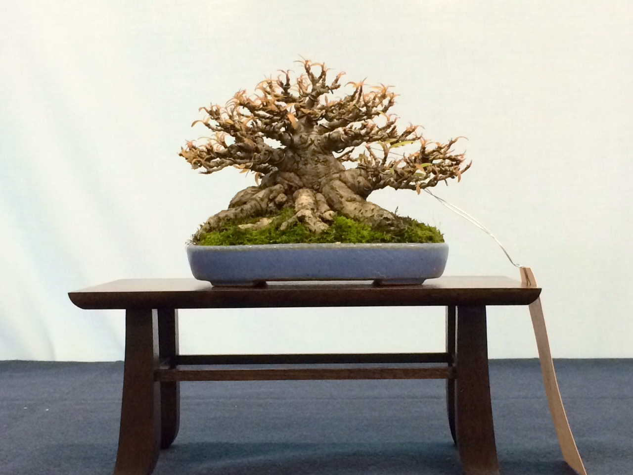 Johnson Teh Ficus