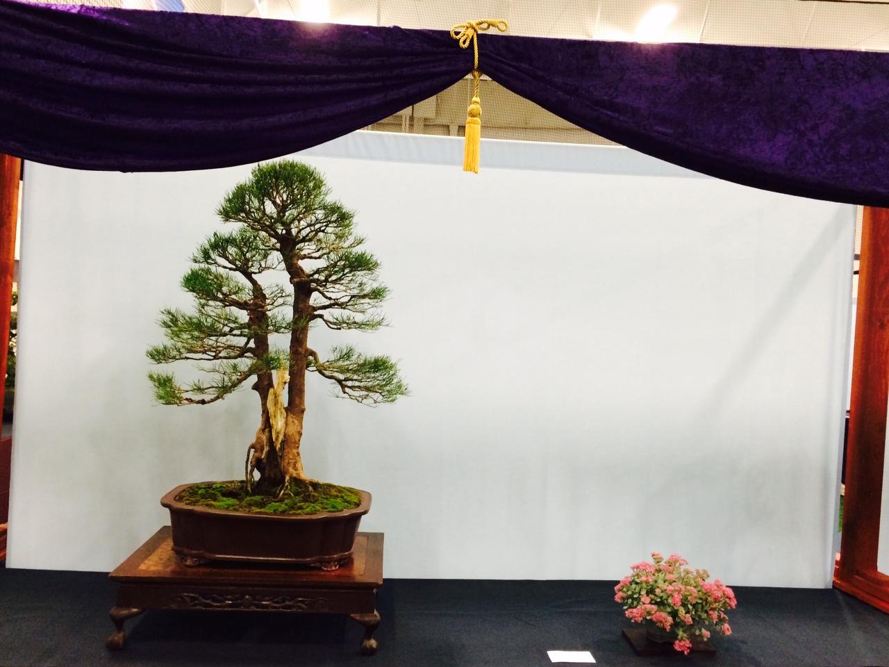 Rob Kempinski Austrailian Pine