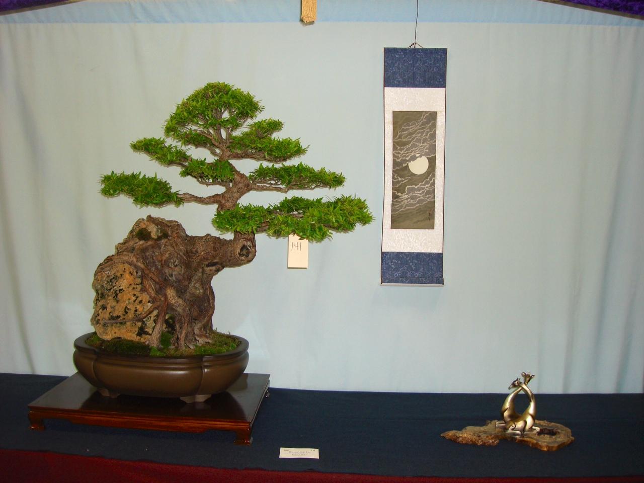 Ed Trout Ficus