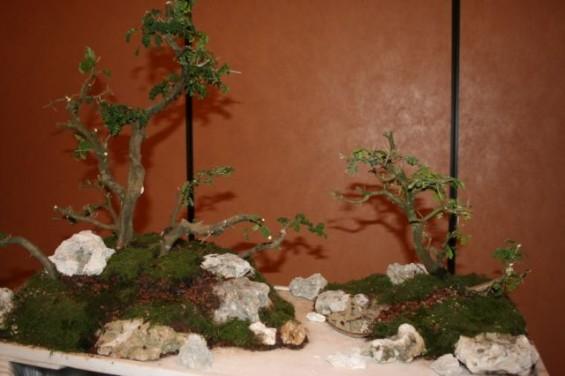 cp_convention_2010-01_n_5