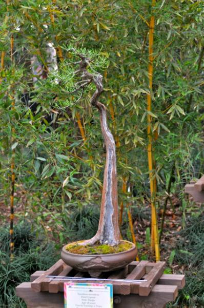 Paul Pikel\'s Pond Cypress