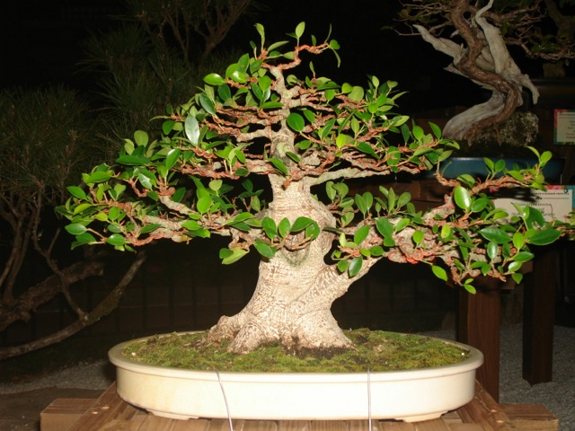Louise\'s tree at night