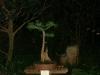 Mary Madison\'s Bald cypress